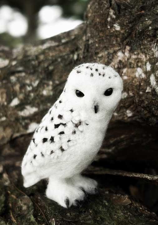piccolo-gufo-delle-nevi-Bubo-scandiacus.jpg